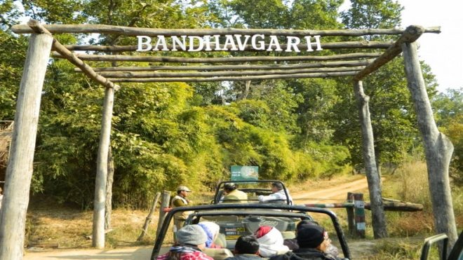 Bandhavgarh tiger reserve chief pulled up as cubs, felines die