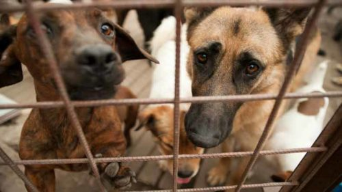 Dog lovers cringe as 'Yulin Festival' kicks-off