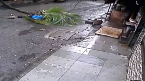 Mumbai: 57-year-old woman dies after being struck by falling coconut tree