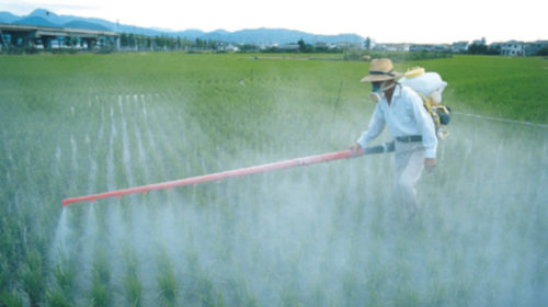 Ban on hazardous pesticides may reduce farmer suicides
