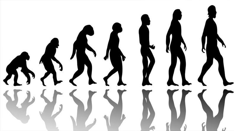 Did humans evolve by chance?