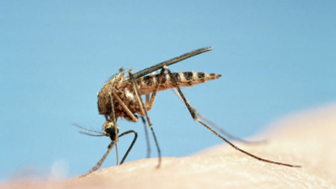 Dengue: How to protect yourself this monsoon