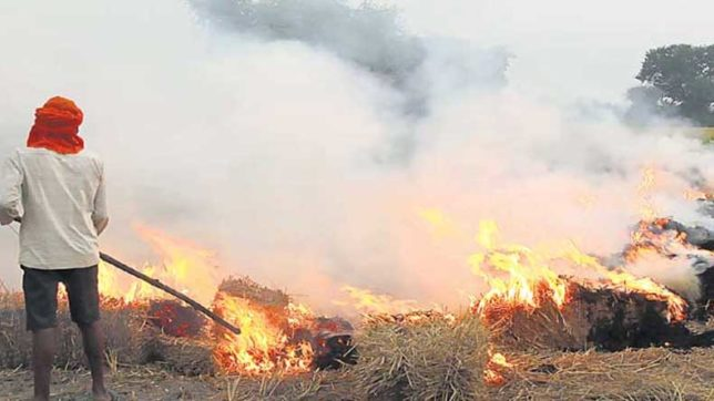 1011 farmers found burning stubble in Haryana: Minister