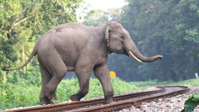 Speeding train crushes 6 elephants to death in Assam