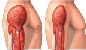 New drug prevents loss of muscle function, reduces fibrosis