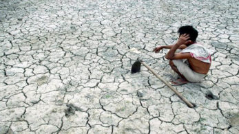 The bench said that it's surprising that govt has not taken any action to address the causes behind farmer suicides.
