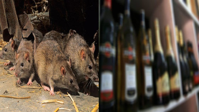 Rats in Bihar guzzle as much as 9 lakh litres of liquor claims state police!