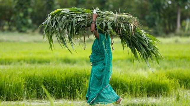 30% agriculture budget to be spent on women farmers: Minister Radha Mohan Singh