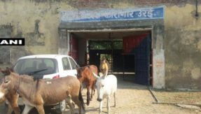 Bizarre news galore! Jailed donkeys released from UP prison after 4 days