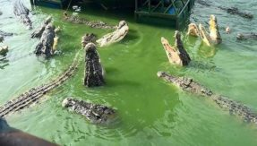Fishing gone wrong! Surrounded by deadly crocodiles, 2 men left stranded for 4 days on truck's roof