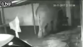 Watch: Elephant and calf raid a house in search of food, return empty stomach
