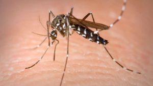 West Nile virus , Memory loss, mosquito bite, arthritis drug, research, study, treatment, fever, causes of West nile virus, chicago news, Ians , IANS news, viral fever, causes of viral fever, mosquito bite diseases
