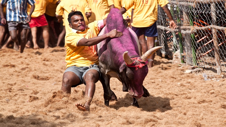 Tamil Nadu: Jallikattu held in Madurai as part of Pongal festivities