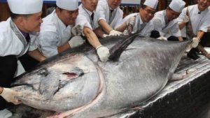 bluefin tuna fish, most expensive tuna fish, most expensive fish, Hiroshi Onodera, Tokyo fish market, Tsukiji, Tsukiji fish market, sushi, sushi dish, sushi restaurant, japan, business news