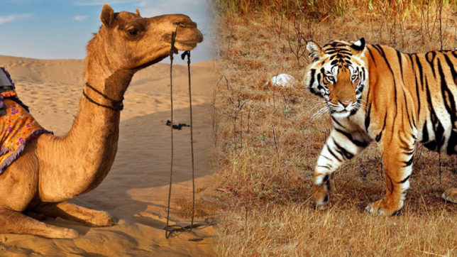 Communities in Rajasthan have high tolerance for wildlife: Study