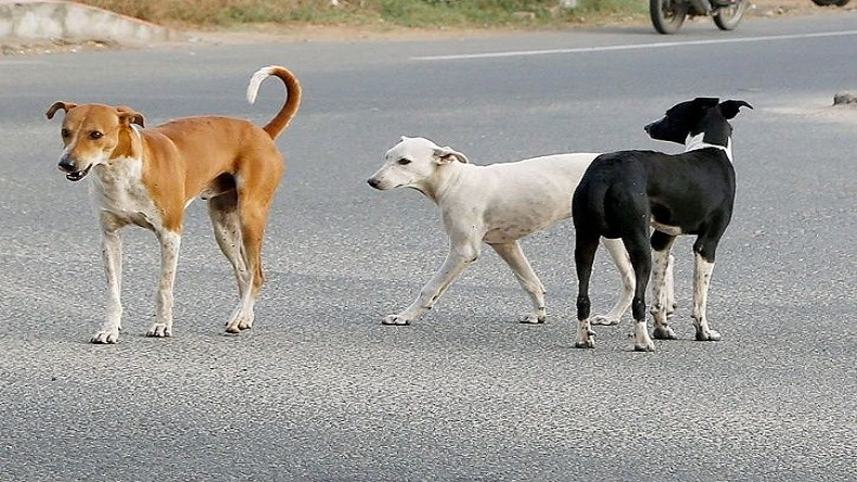 Let it Wag: The 911 for animals