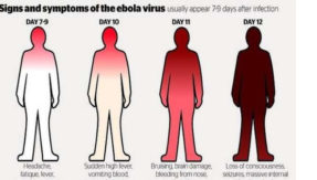 Ebola virus can infect human reproductive organs: Study reveals