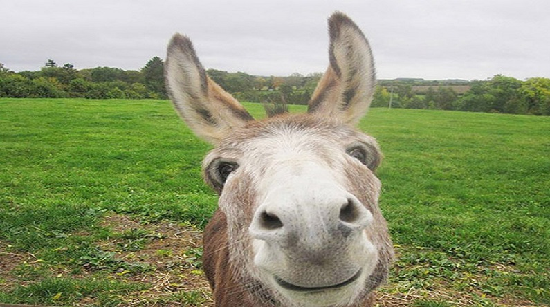 revised donkey clive