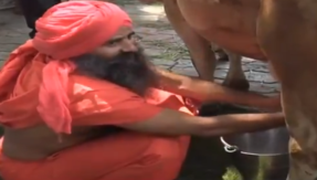 Watch: Ramdev milks cow at Patajanli dairy launch in New Delhi
